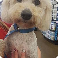 Adopt A Pet :: Shasta - Fresno, CA