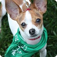 Adopt A Pet :: Marx - Washington, DC