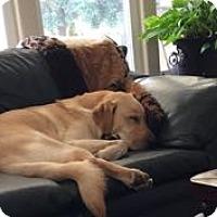 Adopt A Pet :: Hunter - San Francisco, CA