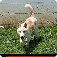Adopt A Pet :: Donna - Windham, NH