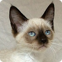 Adopt A Pet :: Joleen M - Sacramento, CA