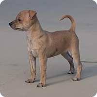 Adopt A Pet :: Latte - Monroe, GA