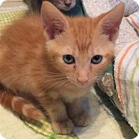 Adopt A Pet :: Jazmen - Sarasota, FL