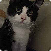 Adopt A Pet :: Winn - New Castle, PA