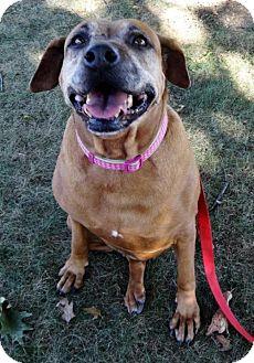 Boxer Mix Dog for adoption in Waynesboro, Pennsylvania - Winnie