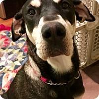 Adopt A Pet :: MAGGIE - ST LOUIS, MO