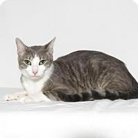 Adopt A Pet :: Phoebe - Lufkin, TX