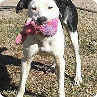Adopt A Pet :: Sadie-NEW LEASH ON LIFE - Snow Hill, NC