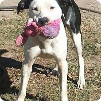 Adopt A Pet :: Sadie-NEW LEASH ON LIFE - Snow Hill, NC