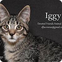 Adopt A Pet :: Iggy - Ortonville, MI