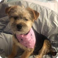 Adopt A Pet :: Claire - Tracy, CA