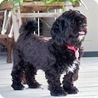 Adopt A Pet :: Gigi - Toronto, ON