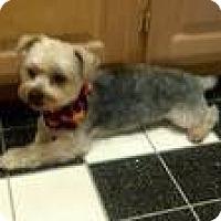 Adopt A Pet :: Sammy - Culver City, CA