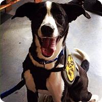 Adopt A Pet :: Trace - New Orleans, LA