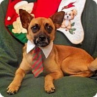 Adopt A Pet :: Timone - Princeton, KY
