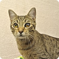 Adopt A Pet :: Skeeter - Foothill Ranch, CA