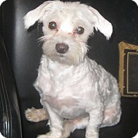 Adopt A Pet :: Davey-adoption pending - Mississauga, ON