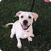 Adopt A Pet :: Toby - Hillsboro, IL