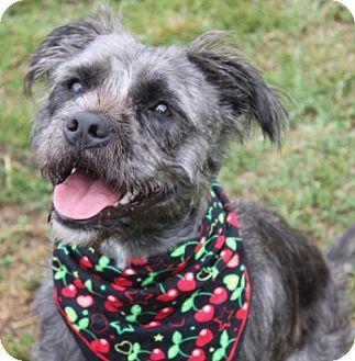 Terrier (Unknown Type, Medium) Mix Dog for adoption in Gibbstown, New Jersey - ZEENA