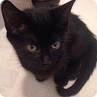 Adopt A Pet :: Sabrina - Medford, NJ