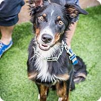Adopt A Pet :: JAX (Courtesy List) - San Pedro, CA