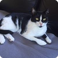 Adopt A Pet :: Edgar - Novato, CA