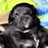 Adopt A Pet :: Carter - Minneapolis, MN