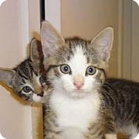 Adopt A Pet :: KITTY BONANZA COOKIE'14 - New York, NY