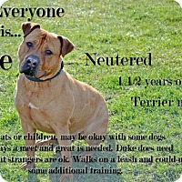 Adopt A Pet :: Duke - Saginaw, MI