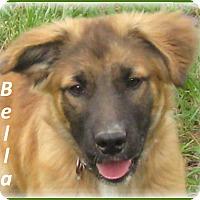 Adopt A Pet :: Bella - Marlborough, MA