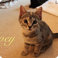 Adopt A Pet :: Zoey - Jackson, NJ