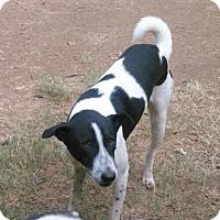 Adopt A Pet :: Scooby - Sparta, NJ