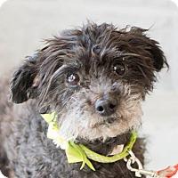 Adopt A Pet :: Fern - Modesto, CA