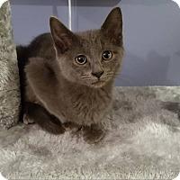 Adopt A Pet :: Nix - Elyria, OH
