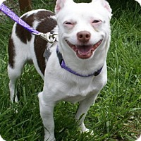 Adopt A Pet :: Bugsy - Framingham, MA