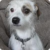 Adopt A Pet :: Indy - Memphis, TN