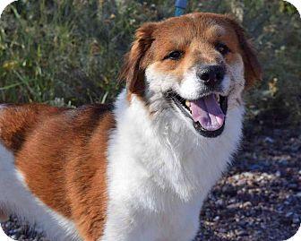 Chihuahua Mix Dog for adoption in Sierra Vista, Arizona - Charlie