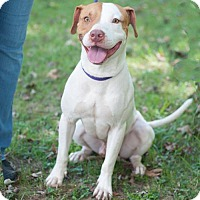 Adopt A Pet :: David - New Martinsville, WV