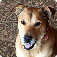 Adopt A Pet :: ROSARIO (Boulder) - Littleton, CO