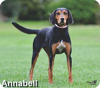 Black and Tan Coonhound Mix Dog for adoption in Ottumwa, Iowa - Annabell