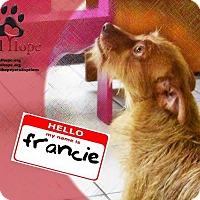 Adopt A Pet :: Francie - Fort Worth, TX