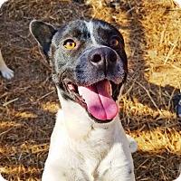 Adopt A Pet :: Jackson - Kingston, TN