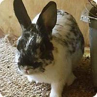 Adopt A Pet :: Trevor - Holbrook, NY