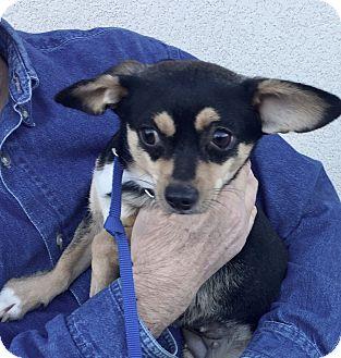 Terrier (Unknown Type, Medium) Mix Dog for adoption in Summerville, South Carolina - Winter
