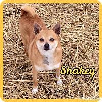 Adopt A Pet :: Shakey - Jasper, IN