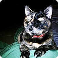Adopt A Pet :: Cuddly Cloe - Laguna Woods, CA