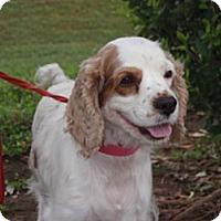 Adopt A Pet :: Presley - Sugarland, TX