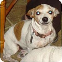 Adopt A Pet :: Liza Jane - Thomasville, NC
