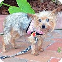 Adopt A Pet :: Nora - Miami, FL
