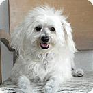 Adopt A Pet :: Campbell